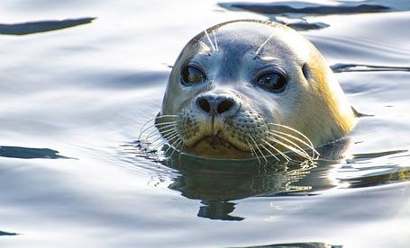 listing-seals